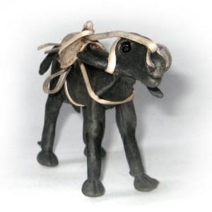Balata – búfalo com sela – PA